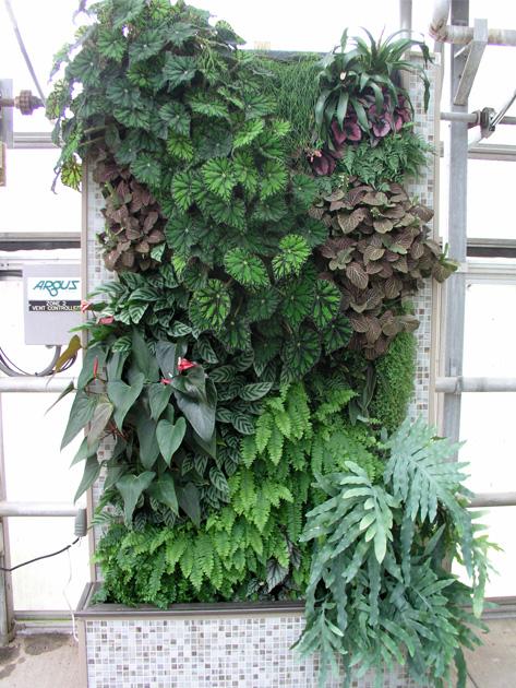 H:\1\垂直绿化\设计参考\植物墙风格\其他\20141227_162834.jpg