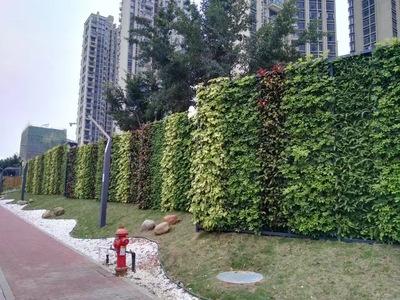 深圳市政路垂直绿化