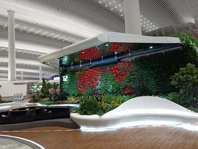 广州白云机场垂直绿化