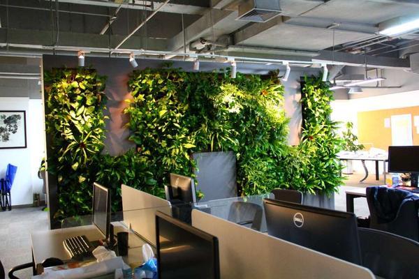 H:\1\垂直绿化\设计参考\植物墙设计\1真植物墙设计\植物墙案例\其他案例\15525案例图片\2014_10\IMG_0188.JPG